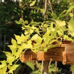 אדניות עץ קטנות למרפסת