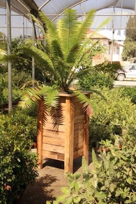 אדנית עץ דגם 'אייתן' - הללויה הארומה שבעץ