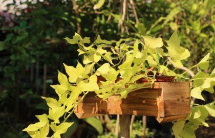 כיצד לעצב מרפסת עם אדניות עץ