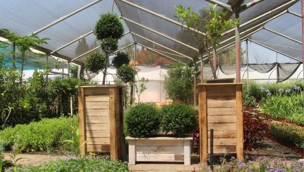 אדניות - חנות מקוונת למכירת אדניות עץ - הללויה הארומה שבעץ